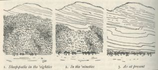 Trubridge 4: An illustration from Herbert Guthrie-Smith's Tutira: The Story of a New Zealand Sheep Station (1921).