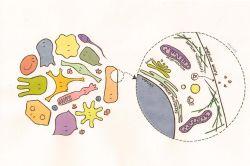 Cell Make Up Diagram