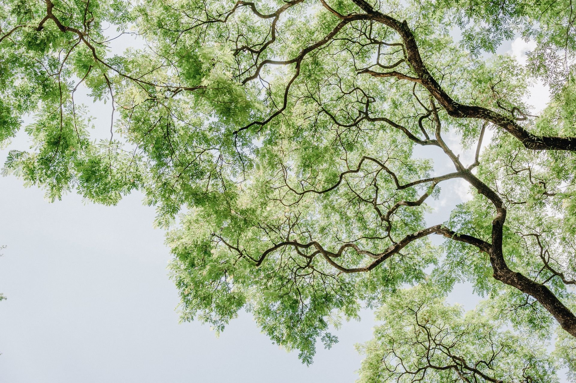 Green tree branches against sky